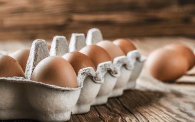 Ab sofort frische Eier aus Freilandhaltung