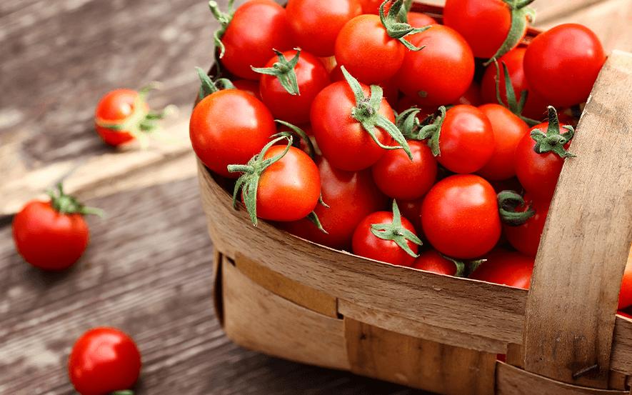 Frische Tomaten aus Datteln direkt vom Bauernhof